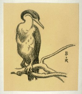 Cormorant, Perched on Branch