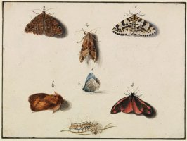 Study of Lepidopterans (Five Adults and a Caterpillar)