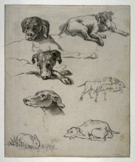 Studies of a Dog and a Hare