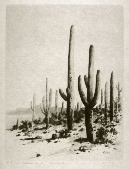 Giant Cactus, Tucson, Arizona
