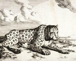 Plate 8 from a series of Leopards