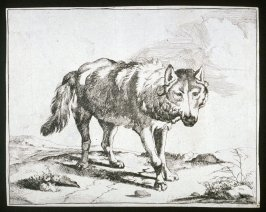 One of eight plates: Wolf (Plate 3)