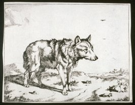 One of eight plates: Wolf (Plate 4)
