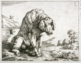 One of eight plates: Swine (Plate 8)