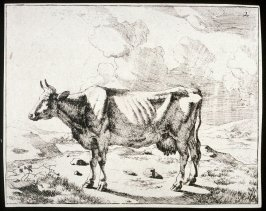 One of a set of 8 etchings of cows: Plate 2
