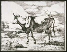 One of a set of 8 etchings of cows