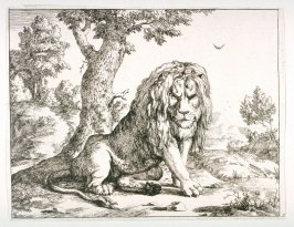 One of a set of 8 Lions (Plate 2)
