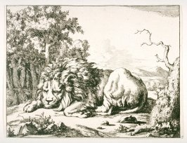 One of a set of 8 Lions (Plate 7)