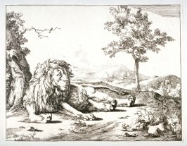 One of a set of 8 Lions (Plate 5)