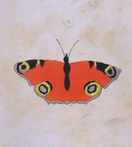 Painted Butterfly, opposite page 16 in the book The Life of John Carter by Frederick James Mills (New York: Hurd and Houghton, 1868)