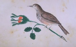 Bird on Flower, opposite page 17 in the book The Life of John Carter by Frederick James Mills (New York: Hurd and Houghton, 1868)