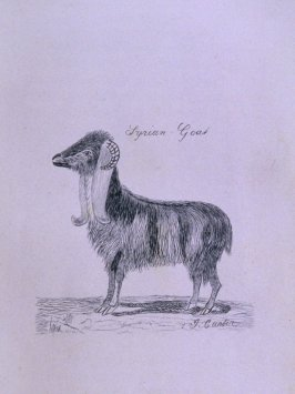 Syrian Goat, opposite page 18 in the book The Life of John Carter by Frederick James Mills (New York: Hurd and Houghton, 1868)