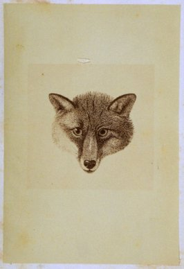 """The Head of a Fox,"" opposite page 39 in the book The Life of John Carter by Frederick James Mills (New York: Hurd and Houghton, 1868)"