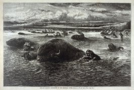 Indians Killing Buffaloes in the Missouri River, from Harper's Weekly (16 May 1874)