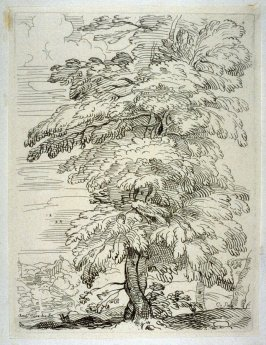 Pair of Entwined Trees in a Landscape, from the Cabinet du Roi
