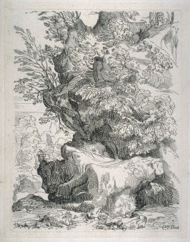 A Rock Covered with Trees, from the Cabinet du Roi