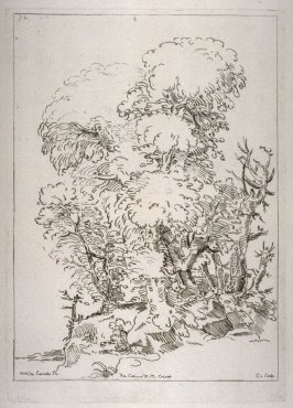 Tree Study, from the Cabinet du Roi