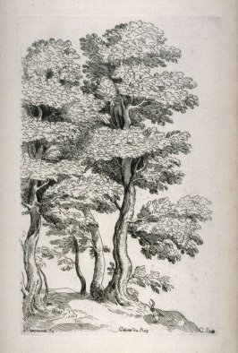 Study of Trees, from the Cabinet du Roi