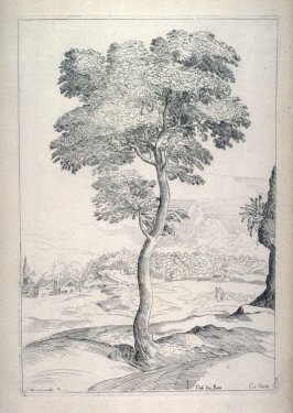 Study of a Tree, from the Cabinet du Roi
