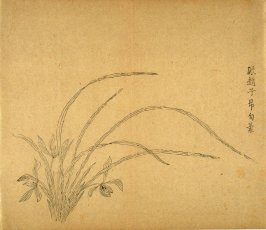 """Cluster in Outline"", Three Flowers at left, No.21 from the Volume on Orchids - from: The Treatise on Calligraphy and Painting of the Ten Bamboo Studio"