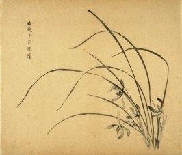 """""""Orchids in Wind"""", Four Flowers at right, No.23 from the Volume on Orchids - from: The Treatise on Calligraphy and Painting of the Ten Bamboo Studio"""