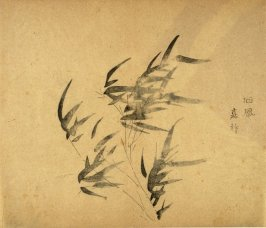 """""""Facing Away From the Wind""""- No.1 from the Volume on Bamboo - from: The Treatise on Calligraphy and Painting of the Ten Bamboo Studio"""
