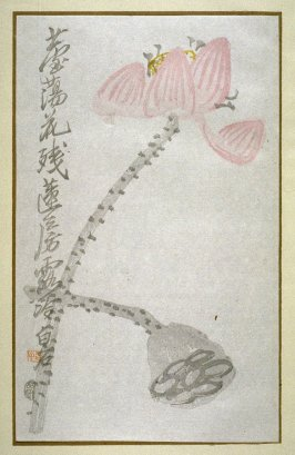 Lotus Flower and Pod