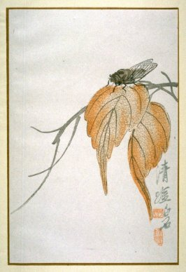 A Cicada and Autumn Leaves