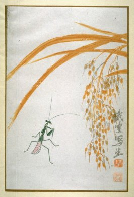 A Praying Mantis and Ears of Rice