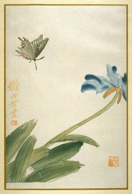 A Butterfly and Iris