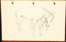 Illustration 7 in the book The Birth of a Horse (sketchbook)