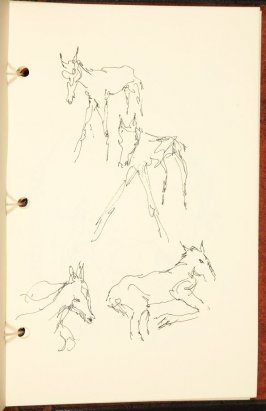 Untitled (Studies of a foal), Illustration 9 in the book The Birth of a Horse (sketchbook)