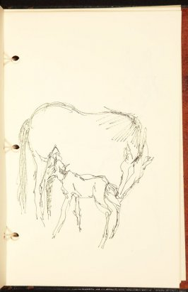 Untitled (Foal nursing), Illustration 10 in the book The Birth of a Horse (sketchbook)