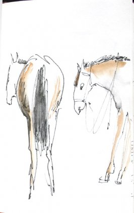 Untitled (Horses), Illustration 28 in the book Sketchbook (Honeymoon)