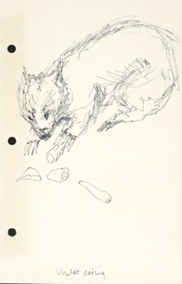 Wombat Eating, Illustration 37 in the book Sketchbook (National Finals Rodeo)