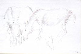 Untitled (Horses), Illustration 1 in the book Sketchbook (Cheyenne, Wyoming)