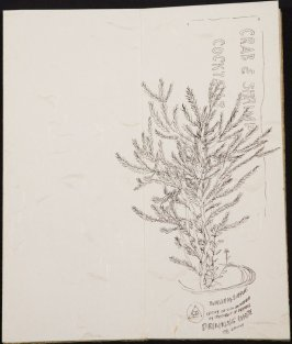 Untitled (Plant), Illustration 2 in the book Blanche's Pier (sketchbook)