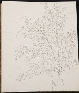 Untitled (Leafy plant), Illustration 3 in the book Blanche's Pier (sketchbook)