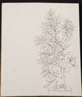 Untitled (Leafy plant with smaller plants), Illustration 4 in the book Blanche's Pier (sketchbook)