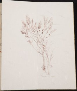 Untitled (Plant), Illustration 11 in the book Blanche's Pier (sketchbook)