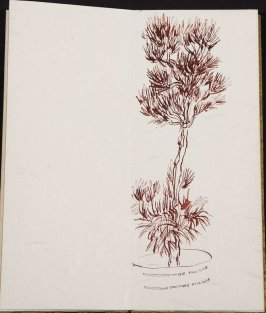 Untitled (Fir tree), Illustration 12 in the book Blanche's Pier (sketchbook)