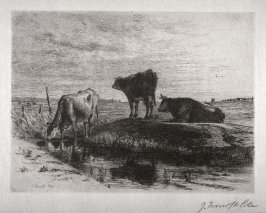Three Cows at a Waterhole