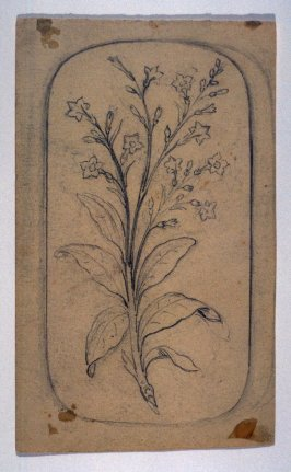 Sketch of a Branch of Leaves and Flowers