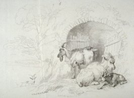 Plate 7 from - Landscape Animals in a Series of Perspective Studies
