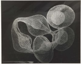 Untitled (Looped-wire sculpture on floor)