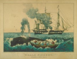 Whale Fishery. Attacking a Right Whale.