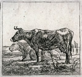 [One of a set of cows]