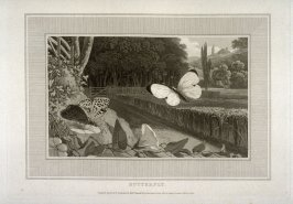 Butterfly, fifteenth plate in the book Interesting Selections from Animated Nature with Illustrative Scenery Designed and Engraved by William Daniell (London: T. Cadell and W. Davies, [ca. 1807-1812], vol. 2(of 2)