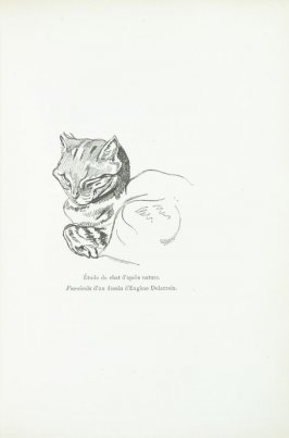 """Étude de chat d'atrès nature. Fac-simile d'un dessin d'Eugène Delacroix,"" pg. 269, in the book Les Chats (Cats) by Champfleury (Paris: J. Rothschild, 1870)."
