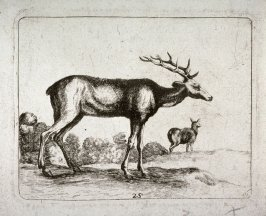 Stag And Doe, after the etching by Stefano Della Bella from the series Diversi animali